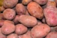 Imagen de Patata roja